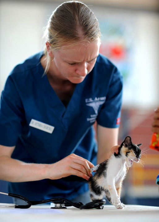 Vétérinaire